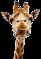 slide-rev4-giraffe1